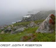 Newfoundland coastal scene